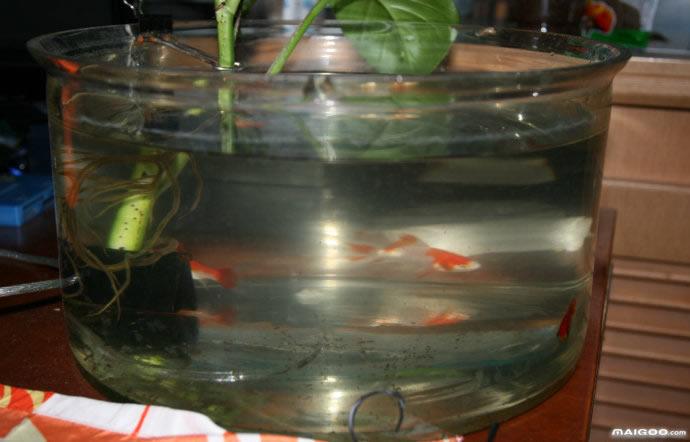 自制鱼缸过滤系统 鱼缸过滤器diy示意图